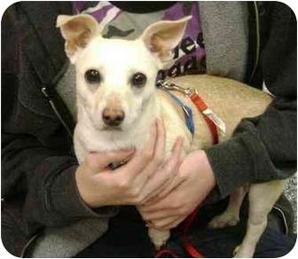 Dachshund Mix Dog for adoption in Houston, Texas - Nellie