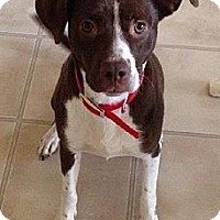 Adopt A Pet :: Sallie Mae - Schererville, IN