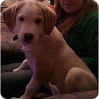 Adopt A Pet :: Big Al - Rigaud, QC
