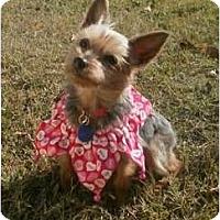 Adopt A Pet :: Cassie - Ocala, FL