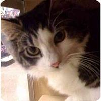 Adopt A Pet :: Paxton - Modesto, CA