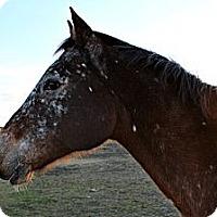 Adopt A Pet :: Cherokee - Farmersville, TX