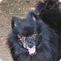Adopt A Pet :: TRISTAN - Hesperus, CO