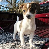 Adopt A Pet :: Skittles - Silsbee, TX