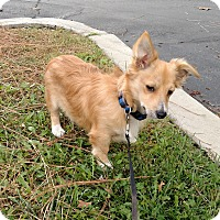 Adopt A Pet :: Sprout - Simi Valley, CA