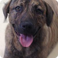 Adopt A Pet :: Angus - Waterbury, CT