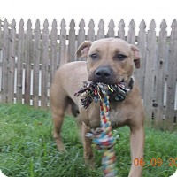 Adopt A Pet :: Ellie - Trenton, NJ