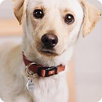 Adopt A Pet :: Dale - Portland, OR
