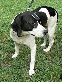 Hound (Unknown Type) Mix Dog for adoption in Rayville, Louisiana - Snoop