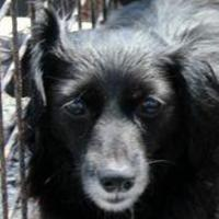 Adopt A Pet :: Ione - Cumberland, MD