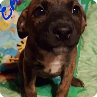 Adopt A Pet :: Emilio - Burlington, VT