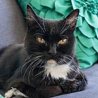 Adopt A Pet :: Athena - San Jose, CA