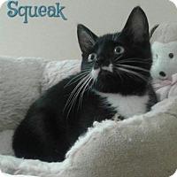Adopt A Pet :: Squeak - Harrisville, WV