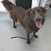 Adopt A Pet :: Wolfy - Manning, SC