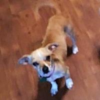 Adopt A Pet :: Elle - Lubbock, TX