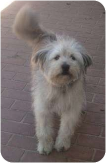 Terrier (Unknown Type, Medium) Mix Dog for adoption in Columbus, Nebraska - Benji