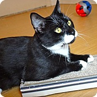 Adopt A Pet :: Benicio - Escondido, CA