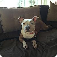 Adopt A Pet :: Daisy Mae - West Hills, CA