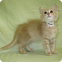 Adopt A Pet :: Atlas - Powell, OH