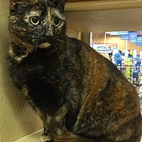 Adopt A Pet :: APHRODITE #2 - New Bern, NC
