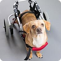 Adopt A Pet :: Chewey - Seattle, WA