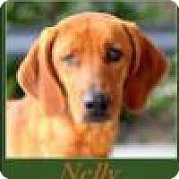 Adopt A Pet :: Nelly - Sullivan, IN