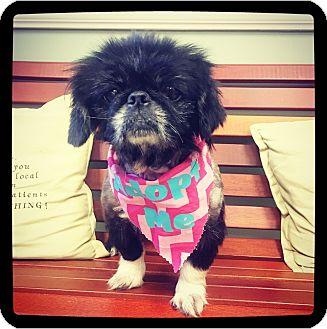 Pekingese Mix Dog for adoption in Grand Bay, Alabama - Pekie