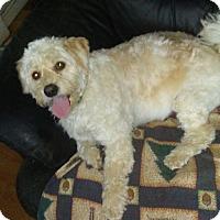 Adopt A Pet :: Levi - Treton, ON