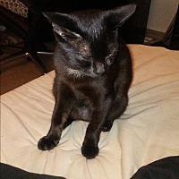 Adopt A Pet :: Orion - Parkton, NC