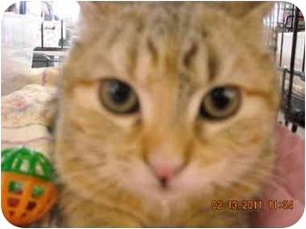 Domestic Shorthair Kitten for adoption in Riverside, Rhode Island - Penelope