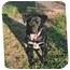 Photo 1 - Australian Cattle Dog/Labrador Retriever Mix Dog for adoption in Longs, South Carolina - Hook