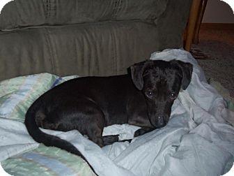 Dachshund Mix Dog for adoption in Hancock, Michigan - Carl