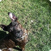 Adopt A Pet :: Clay - Lapeer, MI