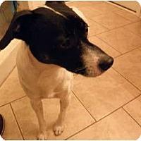 Adopt A Pet :: Junior - York, SC