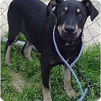 Adopt A Pet :: Marvin - Westbrook, CT