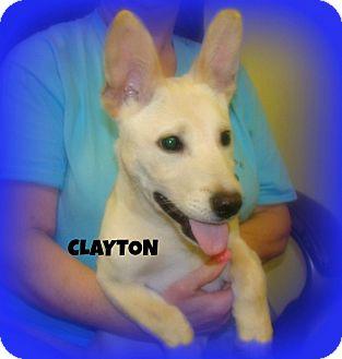 Shepherd (Unknown Type)/Labrador Retriever Mix Dog for adoption in Henderson, Kentucky - CLAYTON