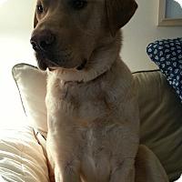 Adopt A Pet :: Zeus - Lewisville, IN
