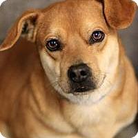 Adopt A Pet :: SpongeBob SquarePants - Phoenix, AZ