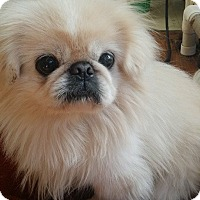 Adopt A Pet :: PEPPY - SO CALIF, CA