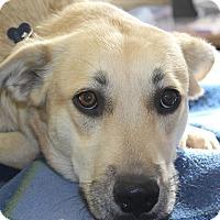Adopt A Pet :: MISTY - Hurricane, UT