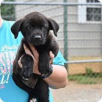 Adopt A Pet :: JARIN - South Dennis, MA