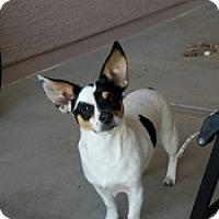 Adopt A Pet :: Ducati - Mesa, AZ
