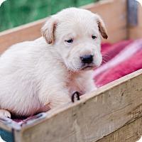Adopt A Pet :: Redd $250 - Seneca, SC