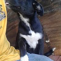 Adopt A Pet :: Jana - Albany, NY