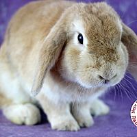 Adopt A Pet :: Stewart - Wilmington, NC