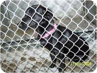 Terrier (Unknown Type, Small)/Labrador Retriever Mix Dog for adoption in Brighton, Tennessee - Lola