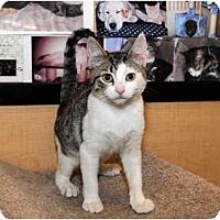 Adopt A Pet :: Tiny Tim - Farmingdale, NY