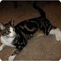 Adopt A Pet :: Dexter - Portland, OR