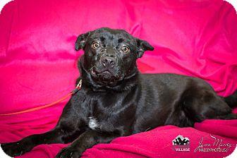 Terrier (Unknown Type, Medium) Mix Dog for adoption in Evansville, Indiana - Zandie