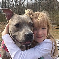 Adopt A Pet :: Collette - nashville, TN
